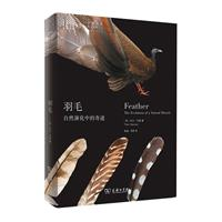 羽毛-自然演化中的奇迹
